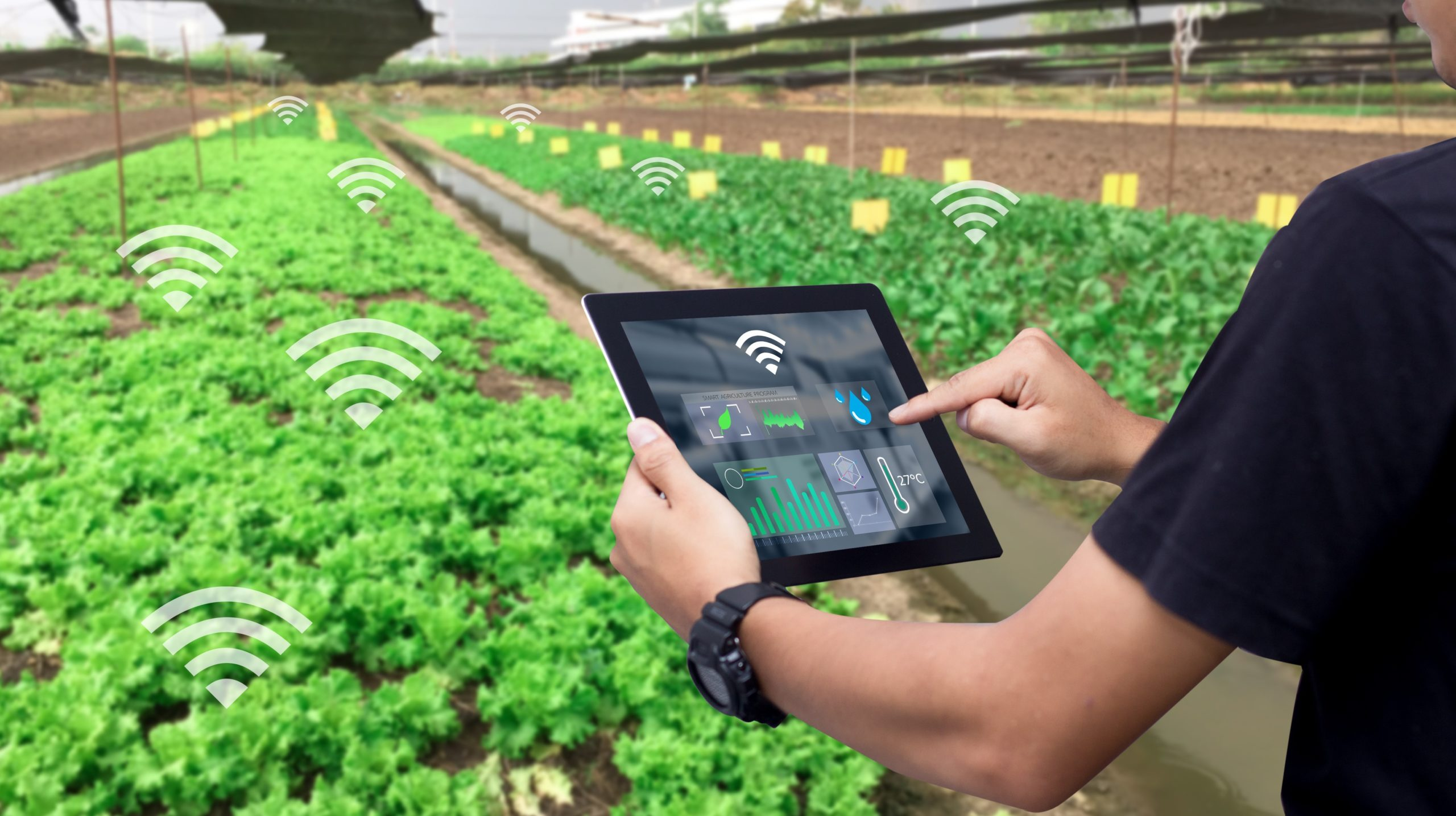 Internet of Things Based Smart Farming: A Revolution on its Way |  Diplomatist
